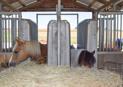 Fressende-Pferde-Heustation