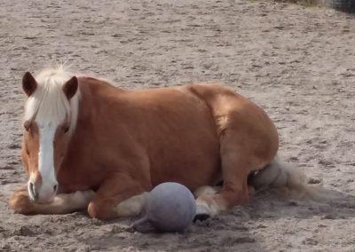Liegendes-Pferd im Aktivstall