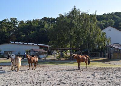 Pferde-Aktivstall Eiflerhof