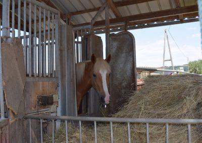 Pferdepension-Heustation